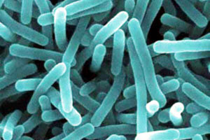 IntestinalBacteria