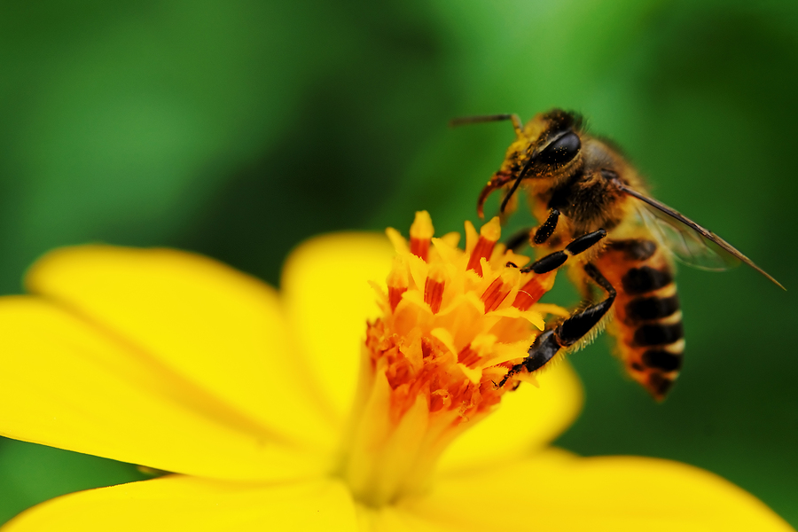 The Benefits Of Bee Pollen — Embracing Health | Holistic ...