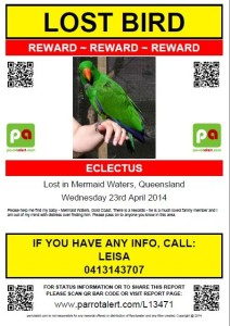 Eclectus Lost