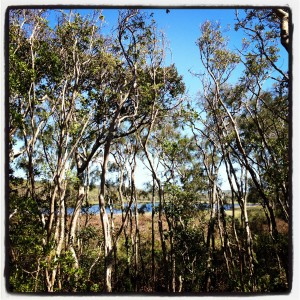 Byron cabin view