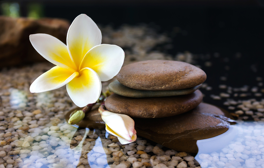 Plumeria Or Frangipani Decorated On Water And Pebble Rock In Zen